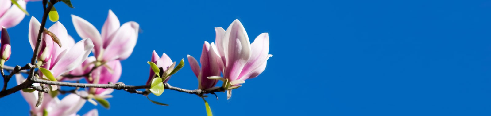 slider-magnolie